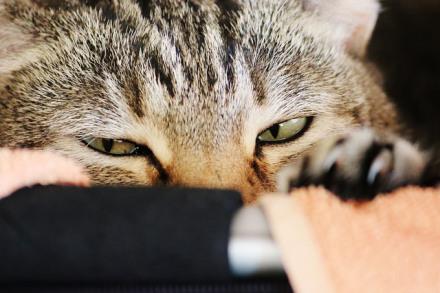 Katzengesicht – 365tageasatzaday